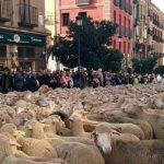 Fiesta de la Trashumancia 2019 en Madrid, horario y recorrido
