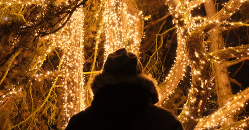 Luces del Real Jardín Botánico