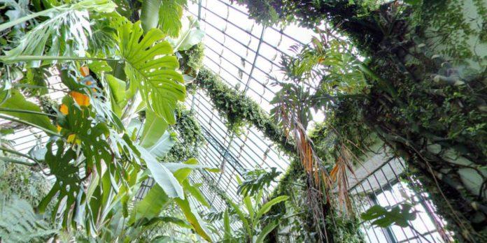 Jardín Botánico de Madrid, precio de las entradas y cuál es el horario gratuito