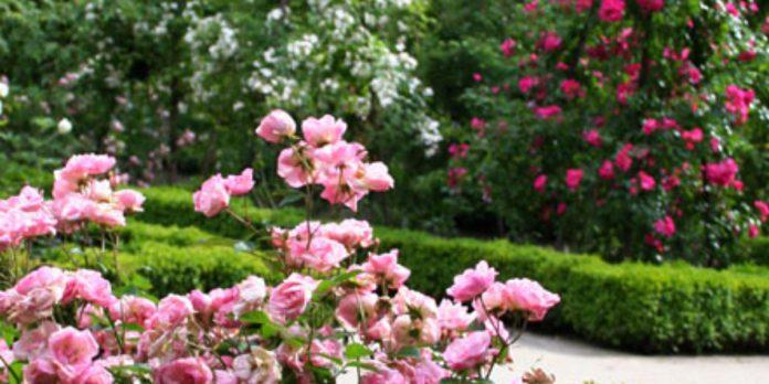 Rosaleda Jardín Botánico